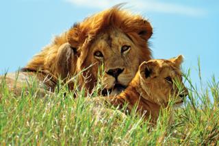 Witness the iconic Big Five on a memorable safari