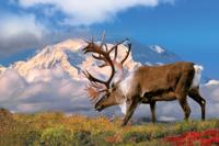 Alaska6