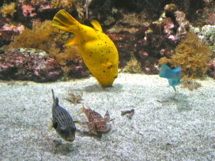 La Rochelle Yellow Fish