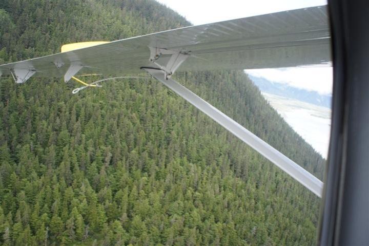 Aerial Treeline