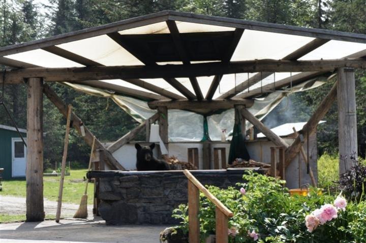 Bear Hut 1