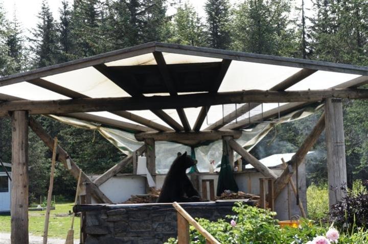 Bear Hut 2