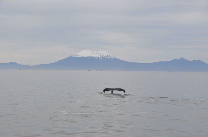 Alaska03