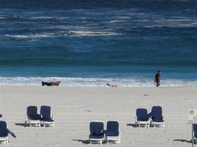 Dogs N Beach