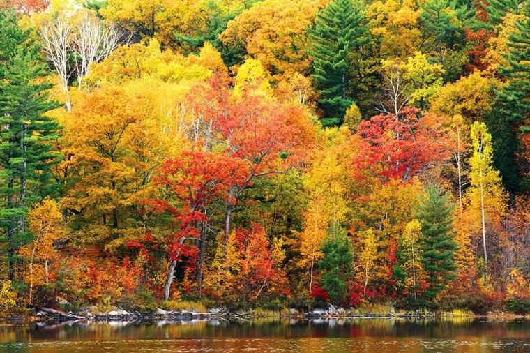FallFoliage