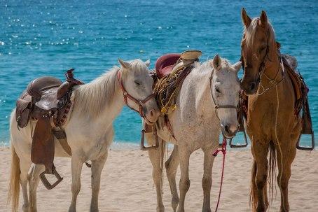 Horseback_Pac Riviera