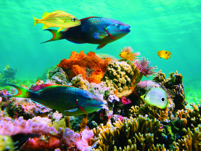 new tropic voyages, Caribbean