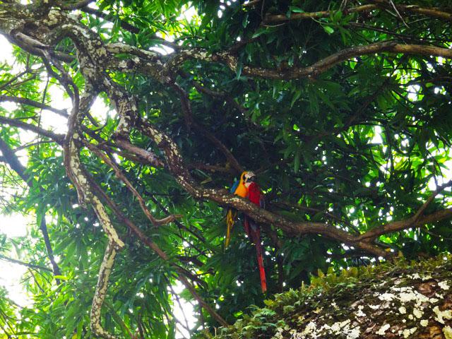 devils-island-macaws