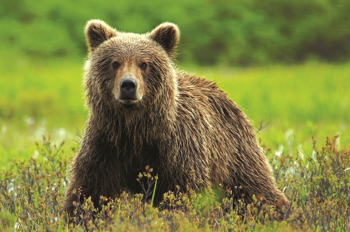 Wildlife - 105771997 rt2.jpg