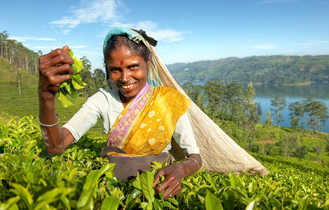 tea in sri lanka, Top 4 Asia Shore Excursions