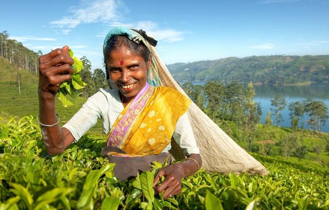 tea in sri lanka, Top 4 Asia Shore Excursions